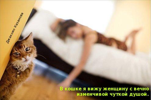 В кошке я вижу женщину с вечно изменчивой чуткой душой. Джакомо Казанова